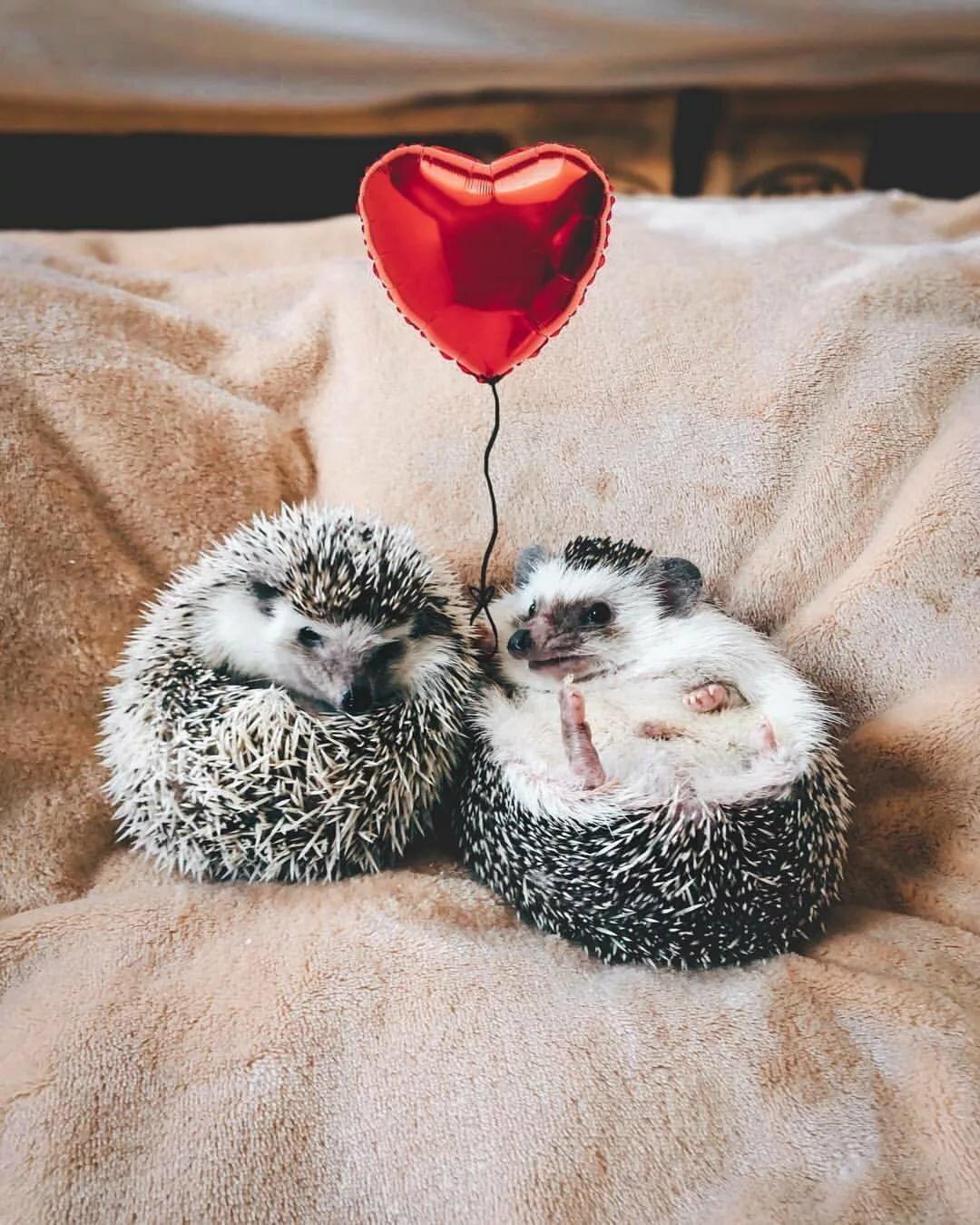 Фото приколы о любви
