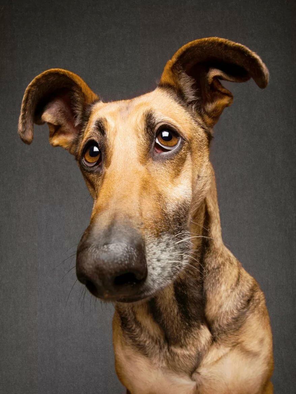 Фото собак разных пород смешные