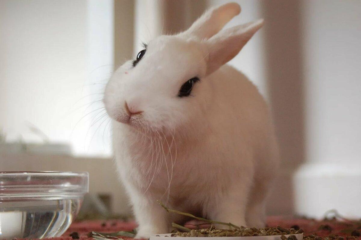 Картинка, картинки кроликов прикольные