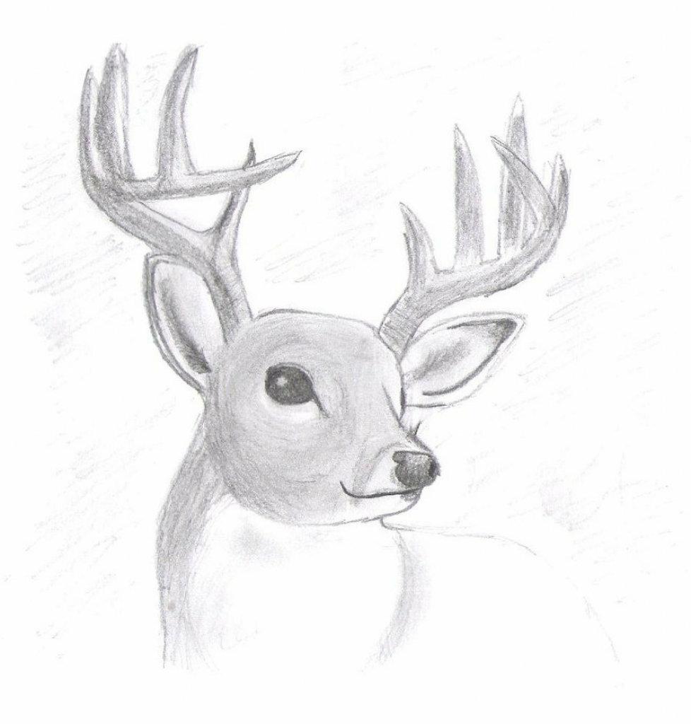 оценить ее, простые картинки для рисования животные рост считается