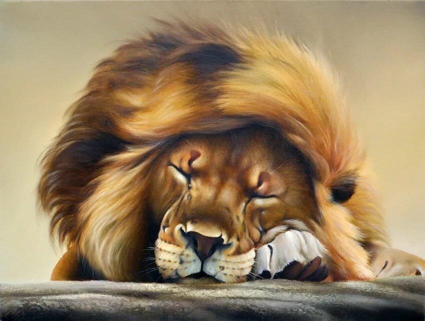 картинки для вайбера со львами