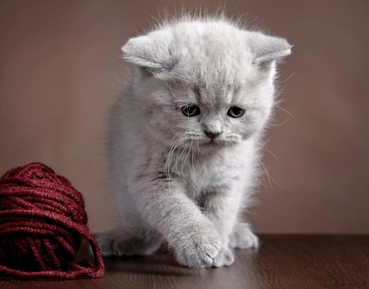 картинки светлых котят заглянуть ствол