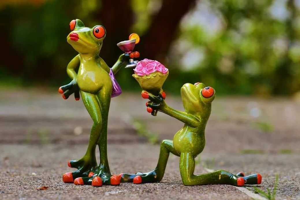 Картинки смешная жаба, свадебным