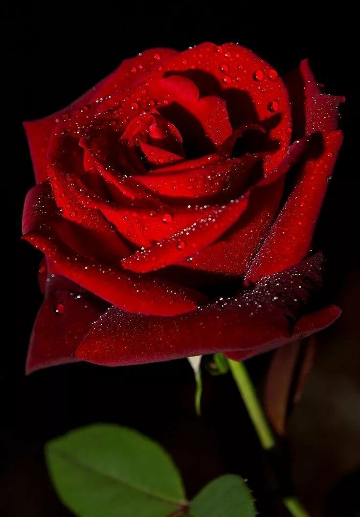 Когда ждешь, красная роза картинки анимация