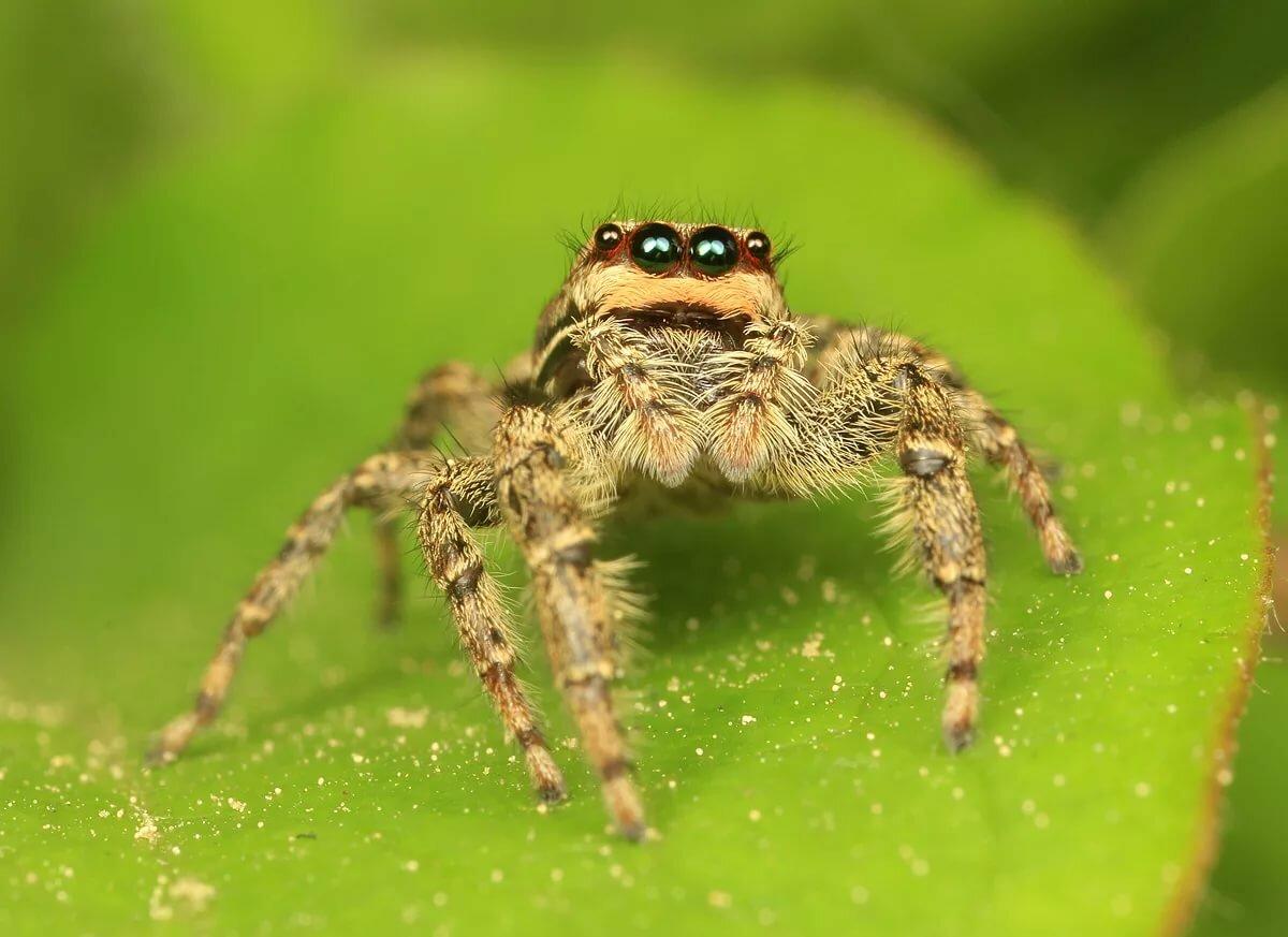 после пары пауки фото и характеристика легко сможете выбрать