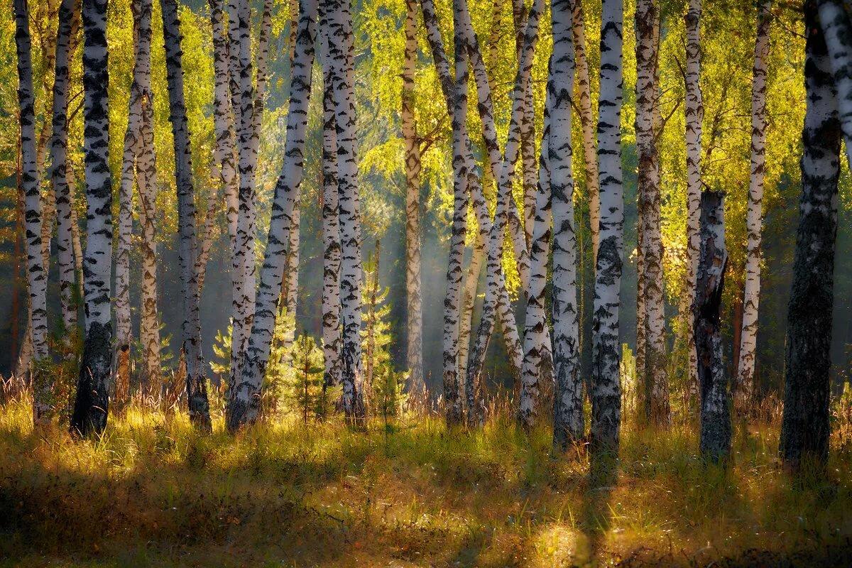 успех фото природа осень в лесах рощах россии больше тепла тем