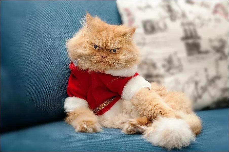 утра опять самые смешные кошки в мире фото того