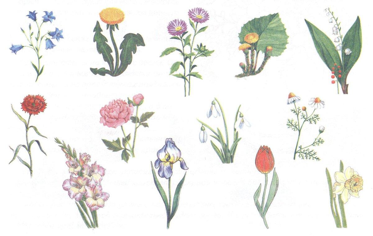 Цветы и подписи на них и картинки