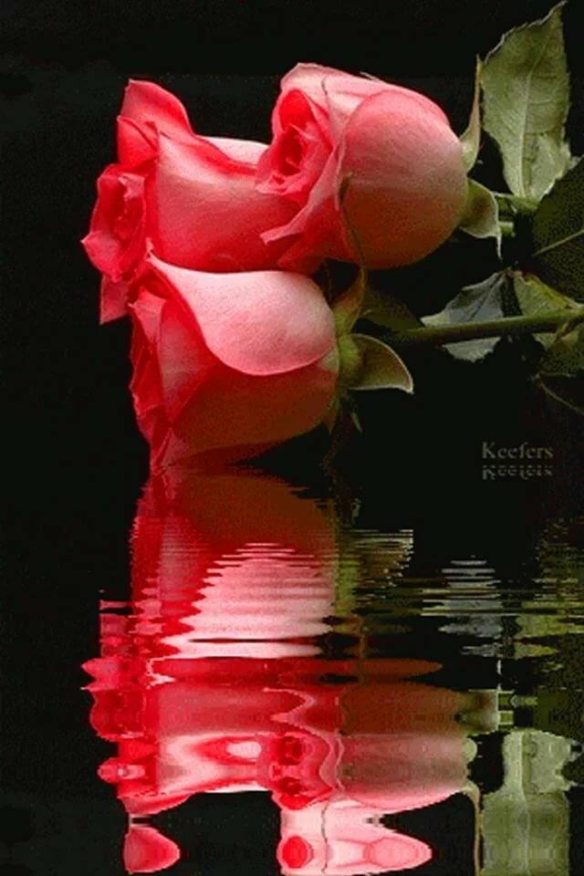 Картинка цветы розы анимация в воде