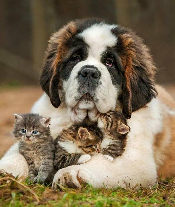 Фото открытки с животными, для