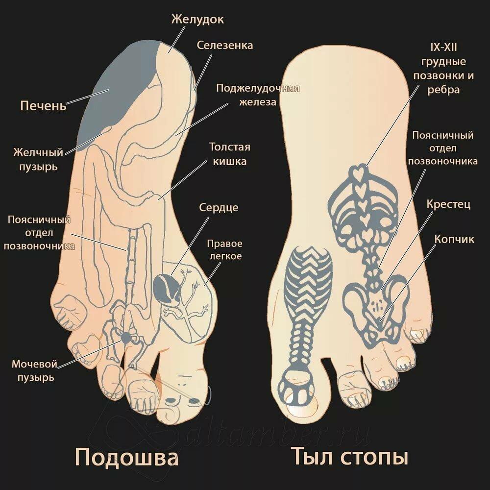 Проекция органов на стопах ног картинки