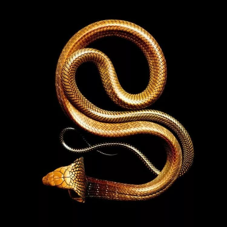 змей в золоте картинки кабины водителя