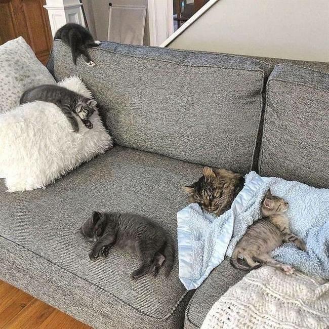 Спят усталые зверушки#Кот #Сон #Диван #домашние_питомцы #котята #животные #утомились #куча_кошек_на_диване