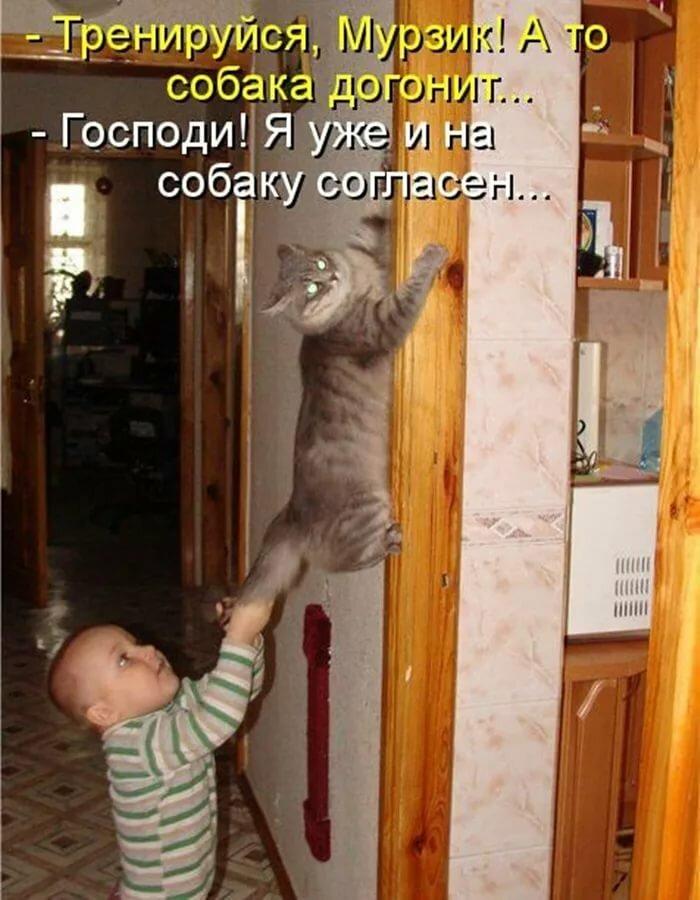 Дочери, смешные картинки про котов с надписями для детей