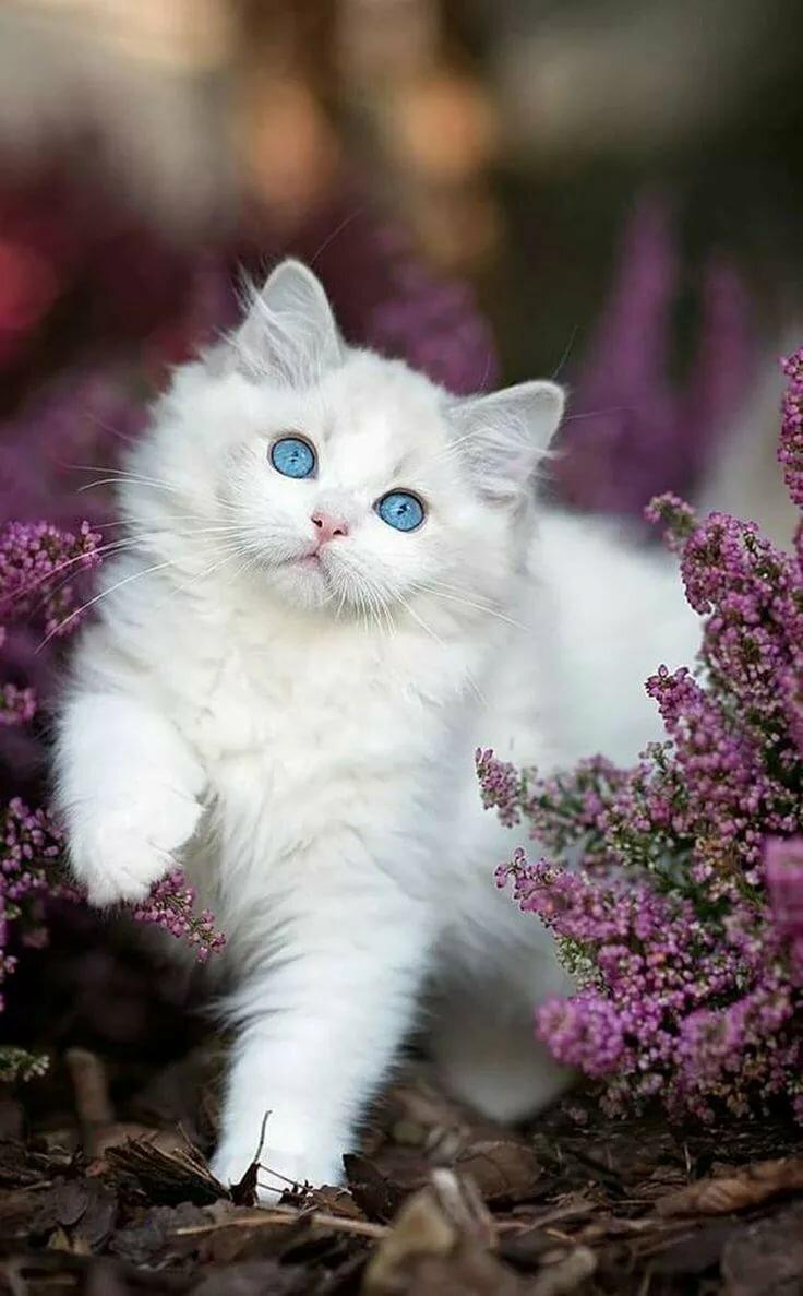 Коты фото красивые коты фото красивые, картинки имя кристина