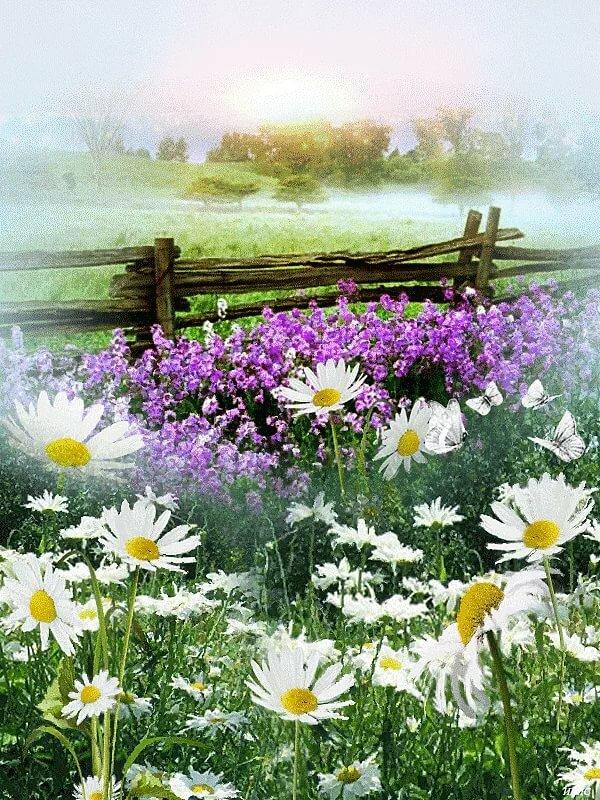 Добрым утром, цветы полевые анимации картинки