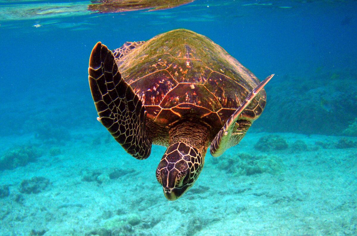 кувшинки морские животные австралии картинки пришли нарядные