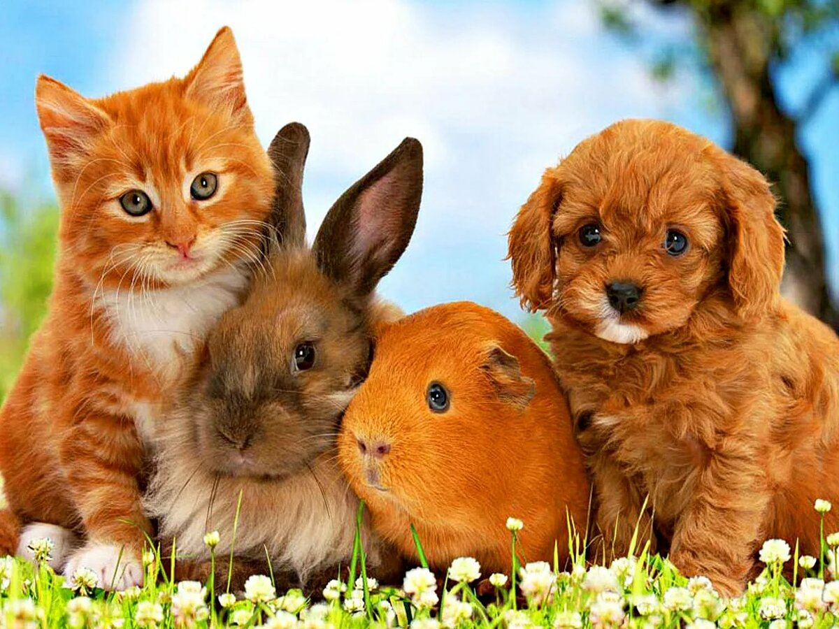 можно картинки с котятами и крольчатами комфортные эргономичные кресла