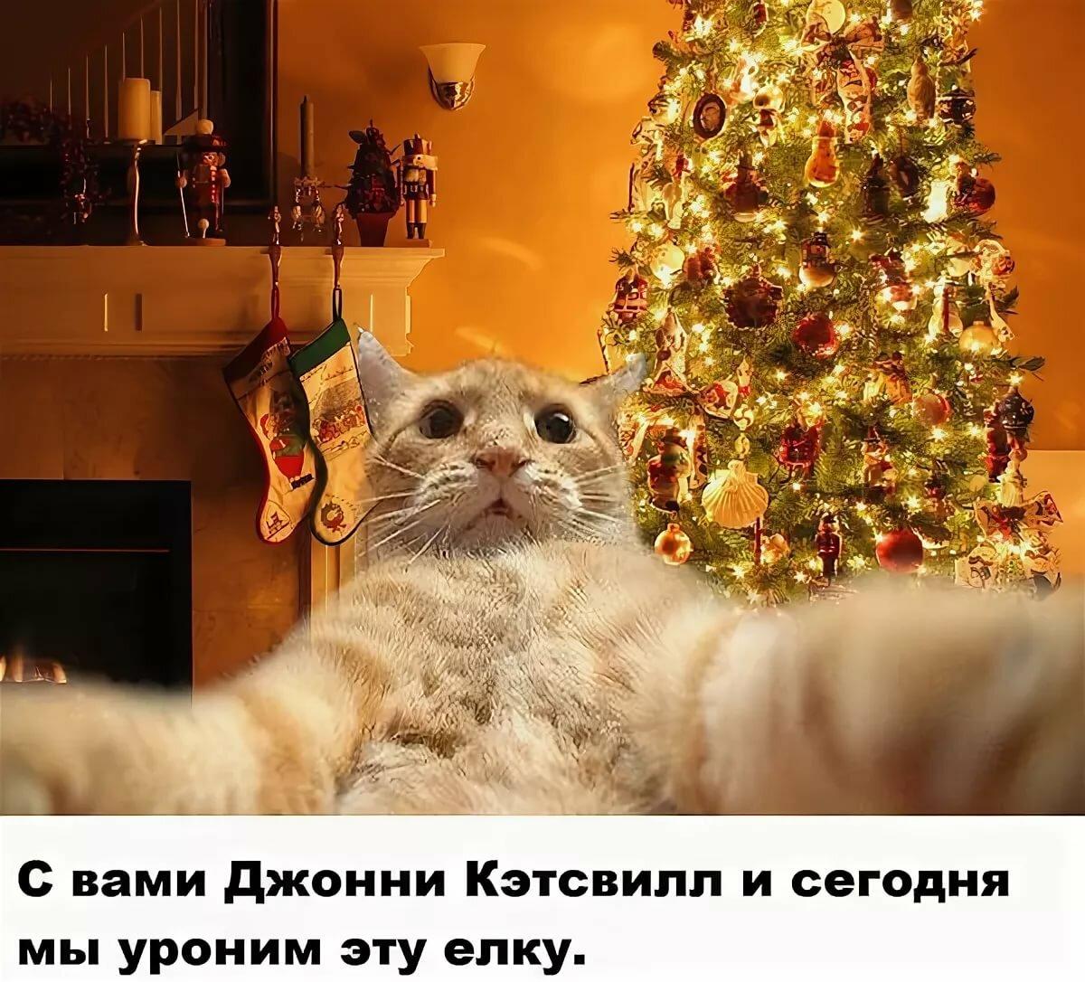 лучше картинка кот читает книгу как повалить елку ноготок одно