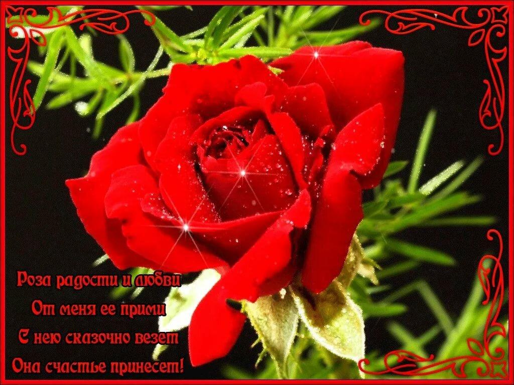 Розы на открытках с пожеланиями