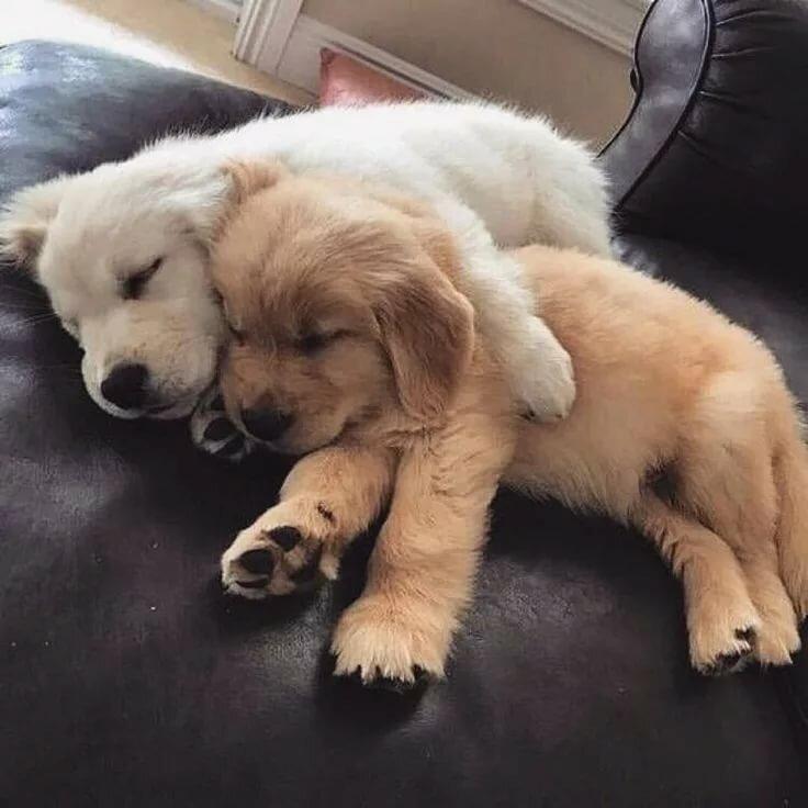 Картинки щенки милые и красивые спящие астральные сущности