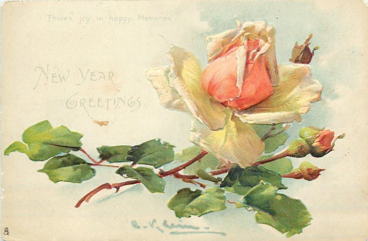 Открытки цветок юности