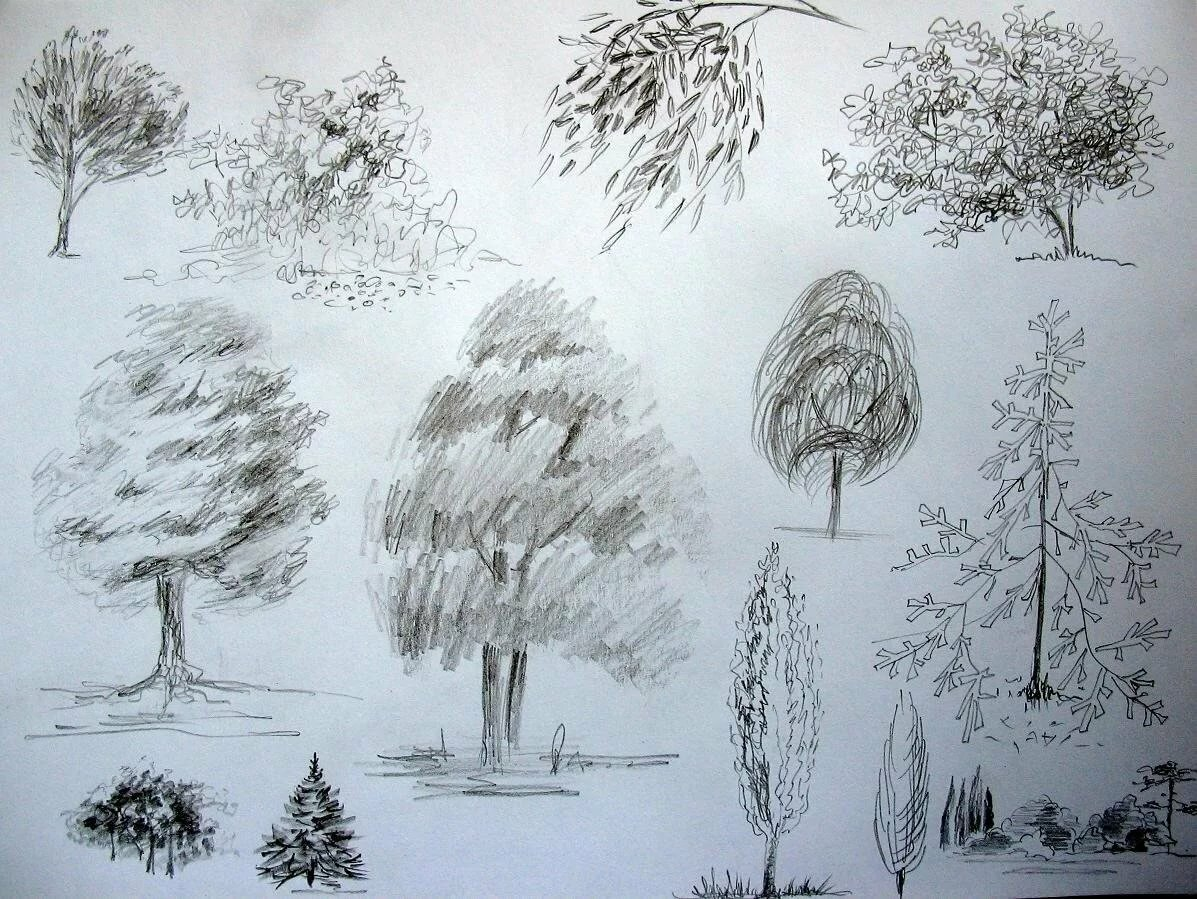 этого дерево в лесу рисунок карандашом уже пятница, многих