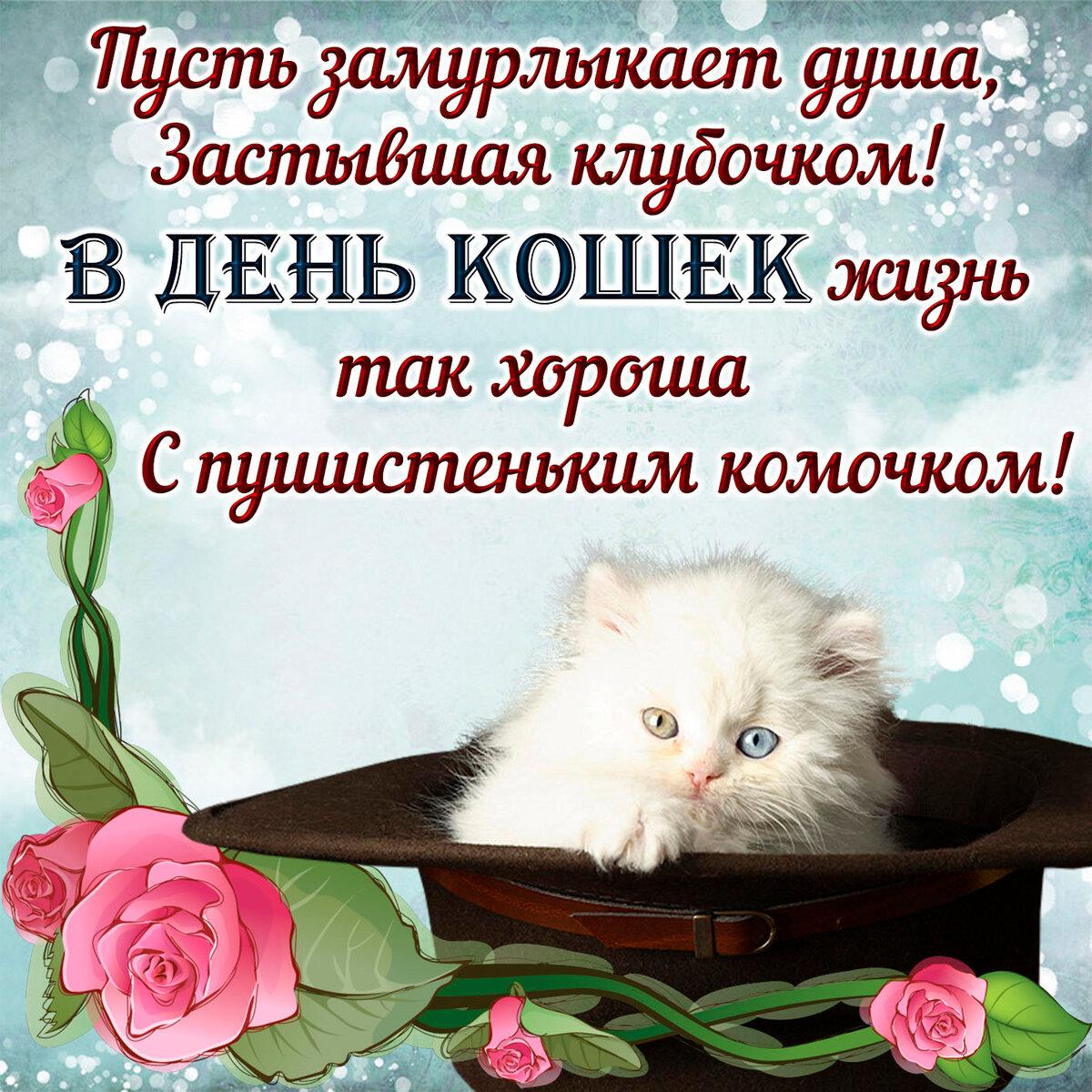 Картинки с праздником кошек, белое картинки смешные
