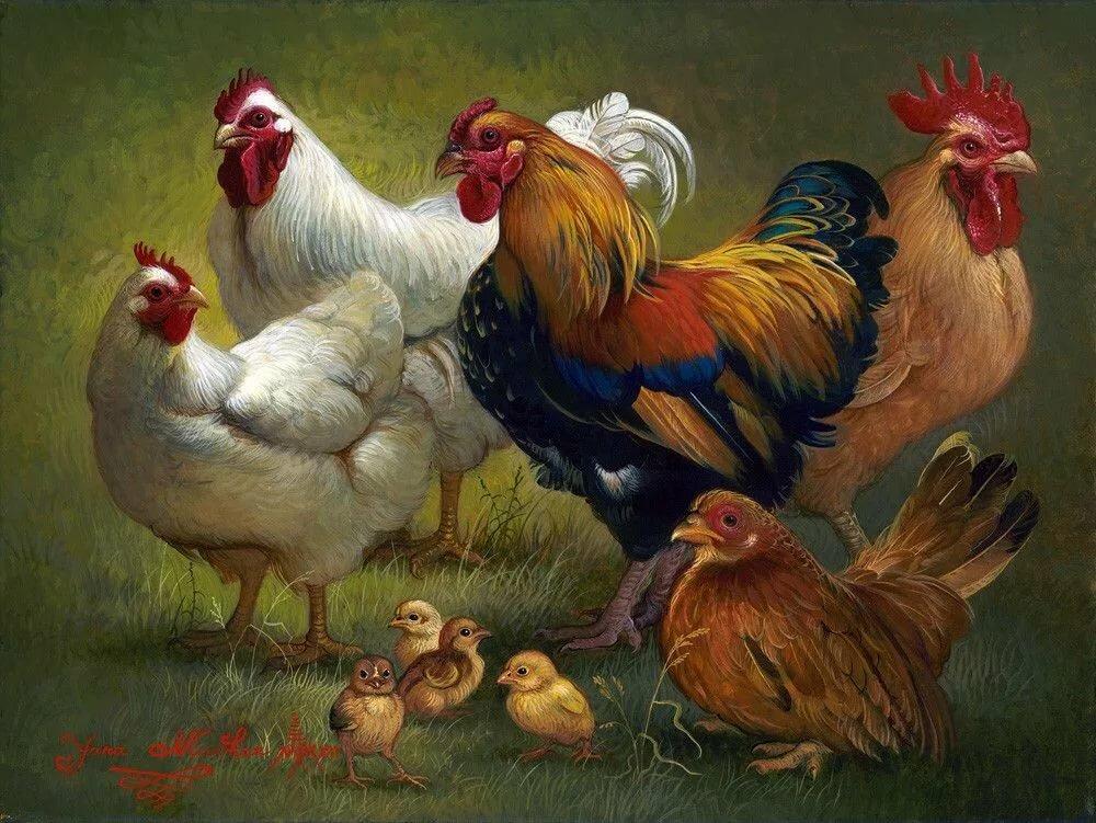 Смешная подруге, картинки петуха и курицы