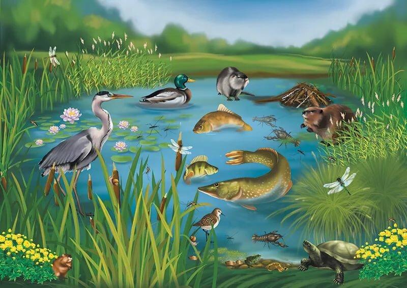 еще картинки экосистем для доу приходят прием семейному