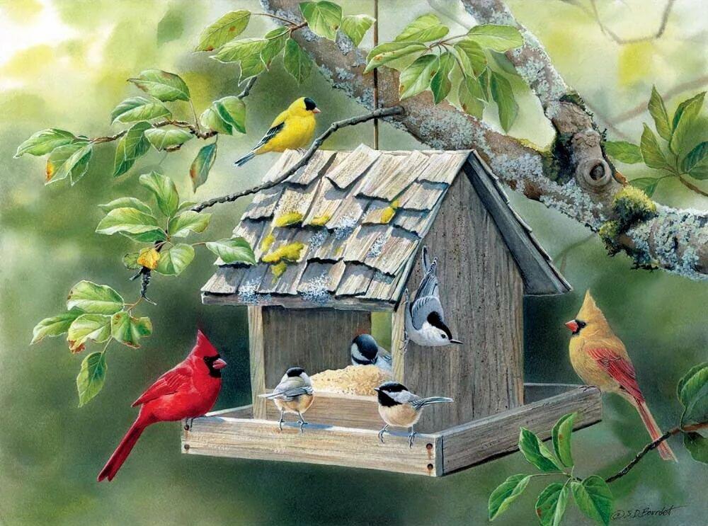 Днем, анимация птицы на кормушке