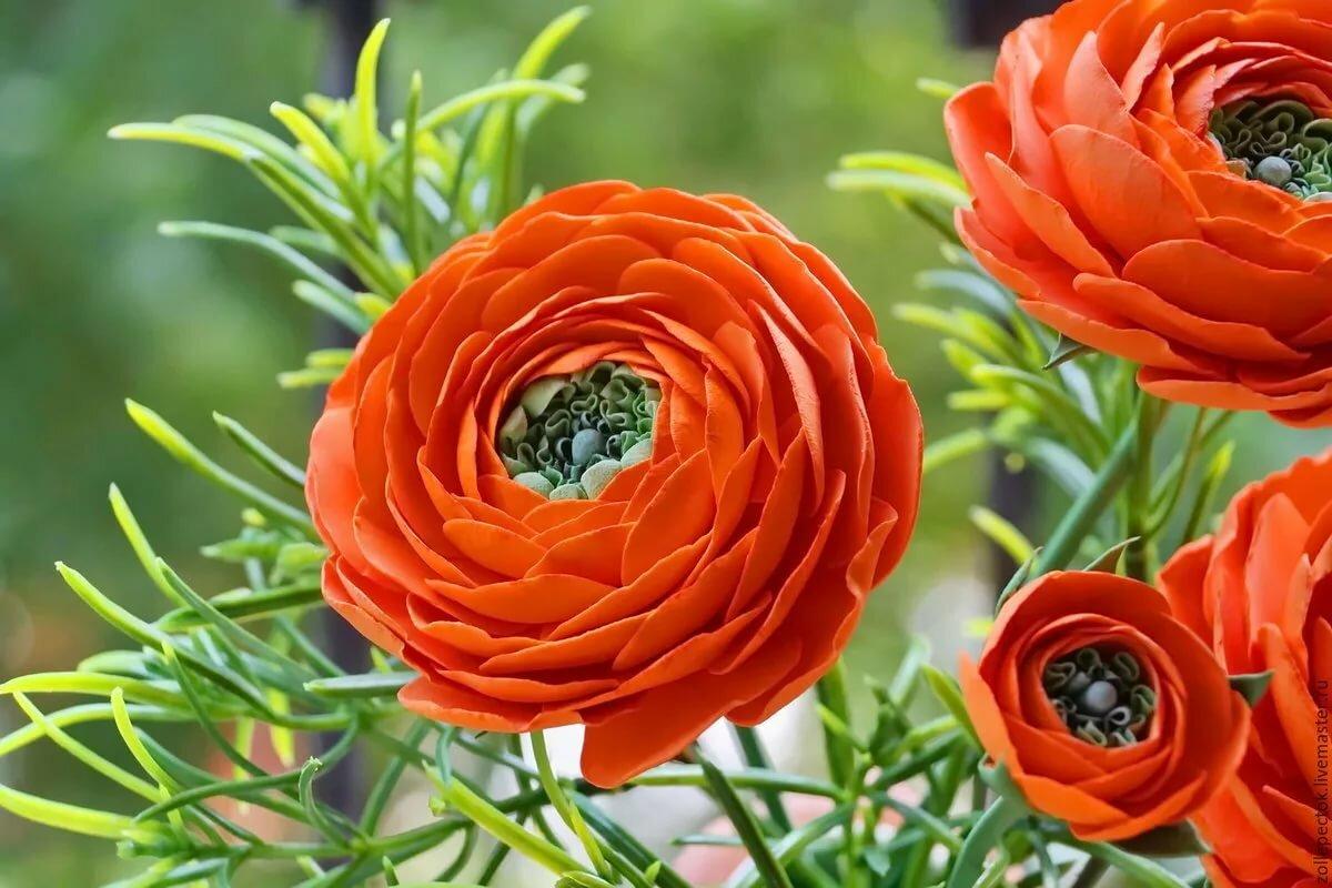 транспортное сообщение фотографии цветов лютиков повара
