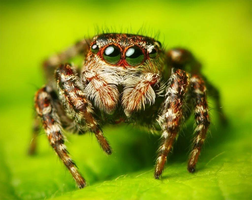 Картинки пауков милых