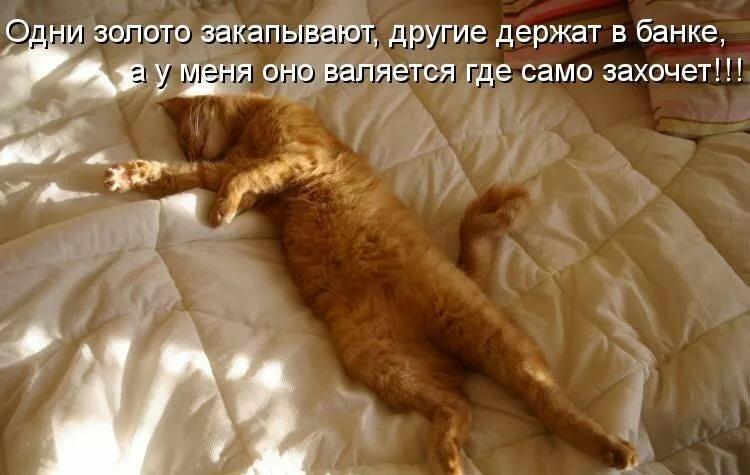 Картинки с надписями кошки о работе