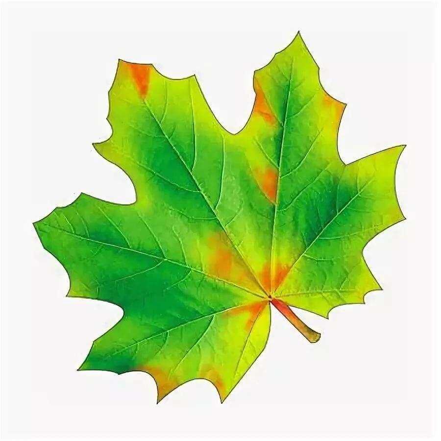 Осенние листья цветные картинки распечатать
