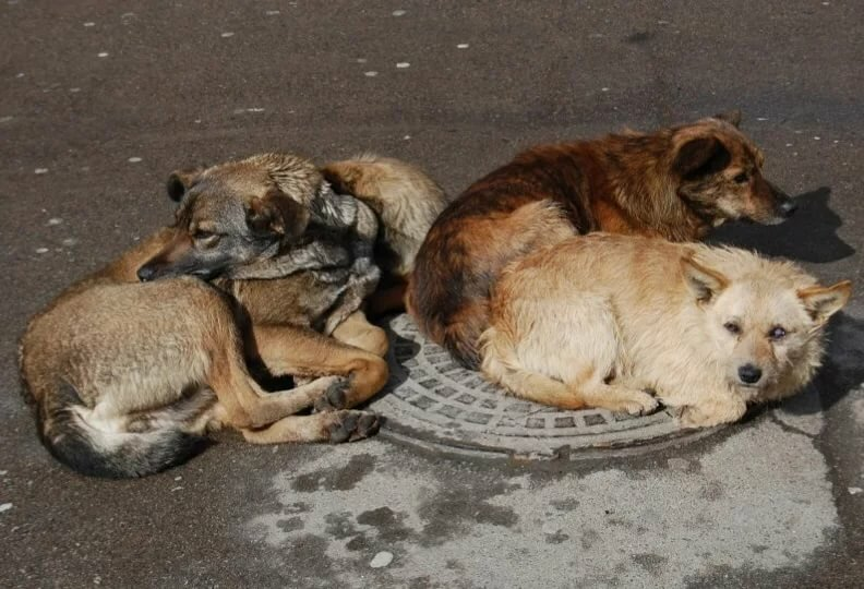 Проблема бездомных животных картинки