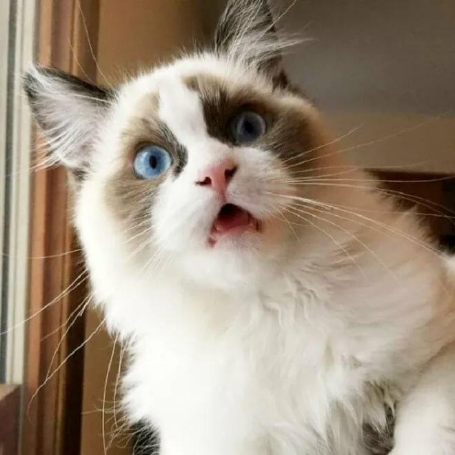 Марта приколом, прикол удивленный кот картинка