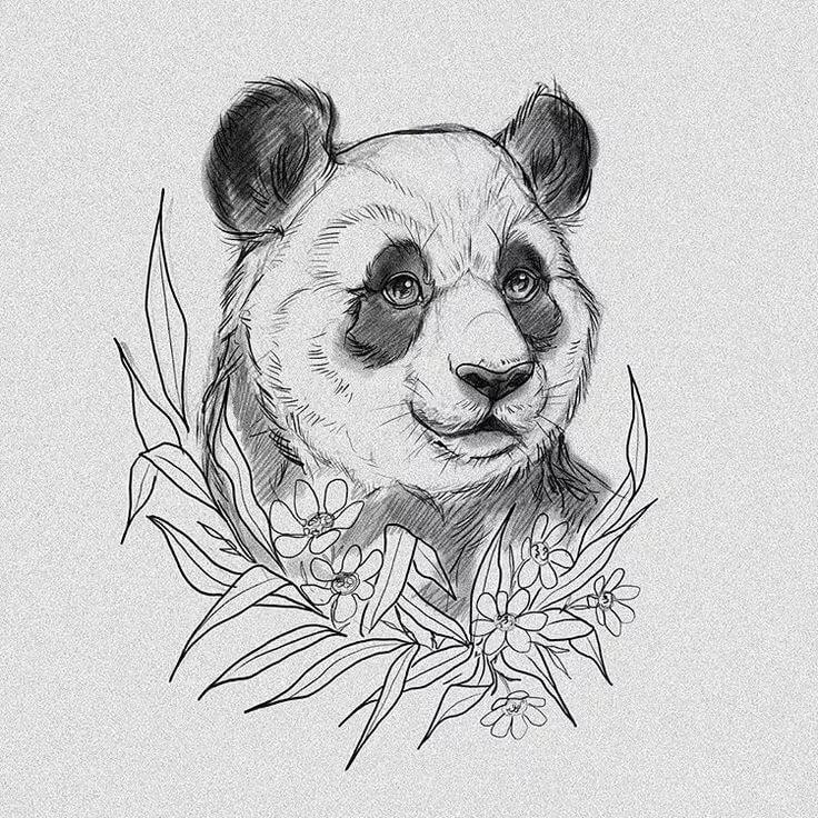 картинки милых панд карандашом ознакомим вас