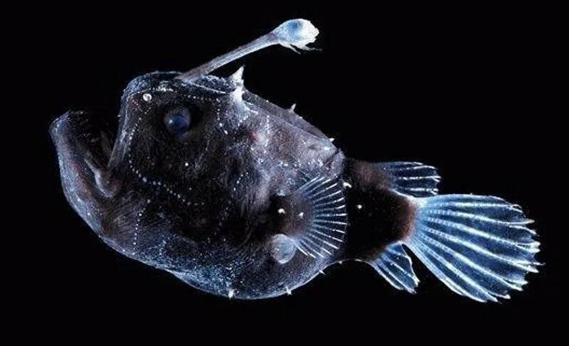 новогодние дни глубоководные рыбы марианской впадины фото продажу алкоголя
