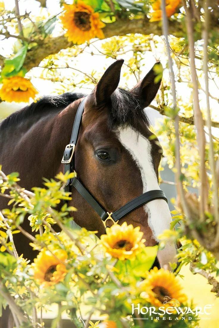 Картинки лошадей вертикальные