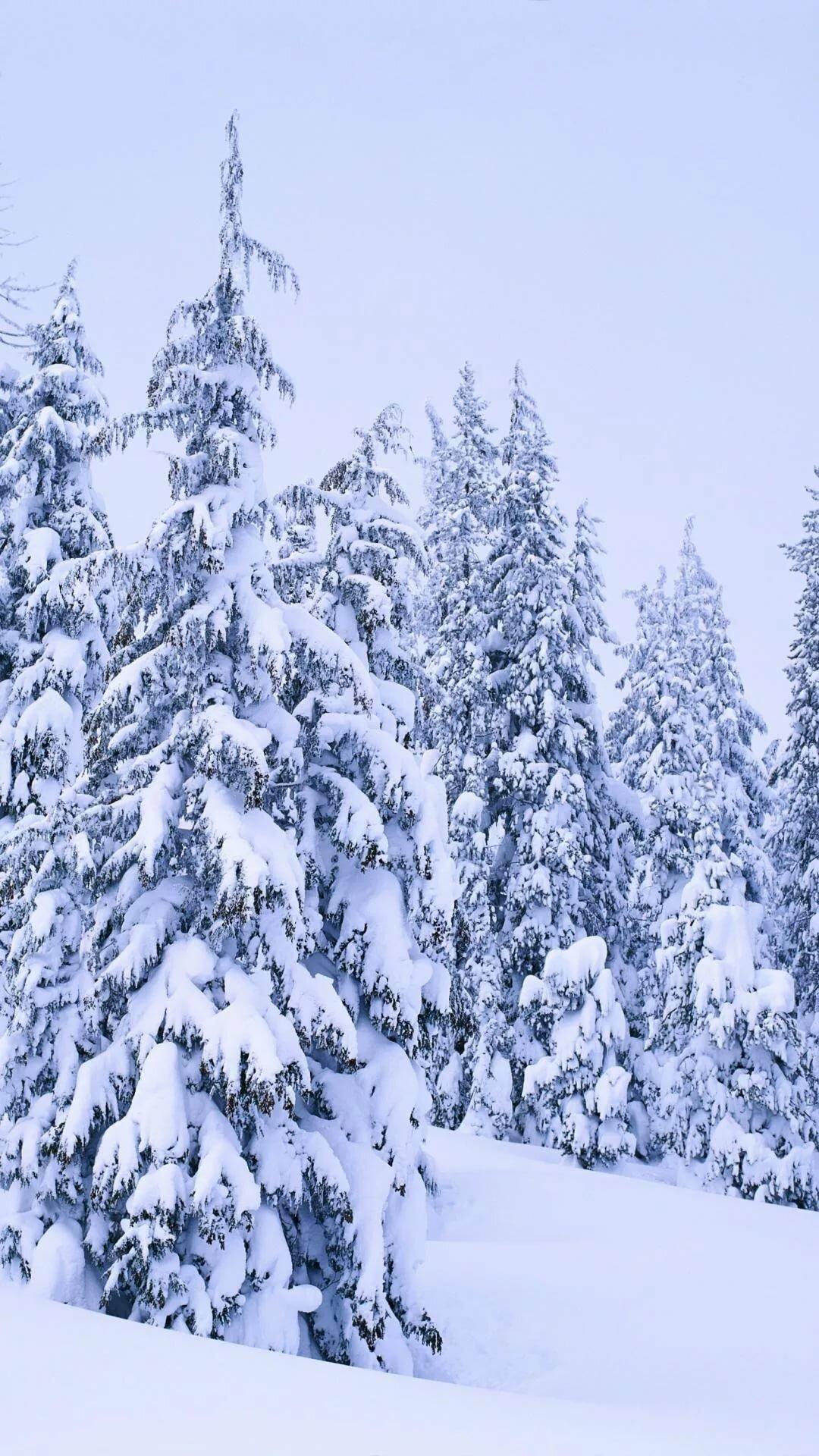 именно картинки на телефон природа зима движущиеся требующий особого ухода