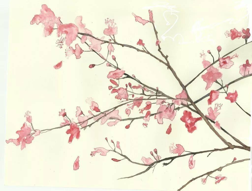 Сакура открытка рисунок