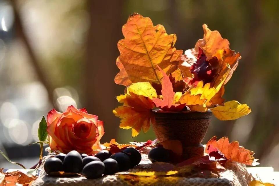 Надписями, музыкальные открытки с добрым утром в октябре природа
