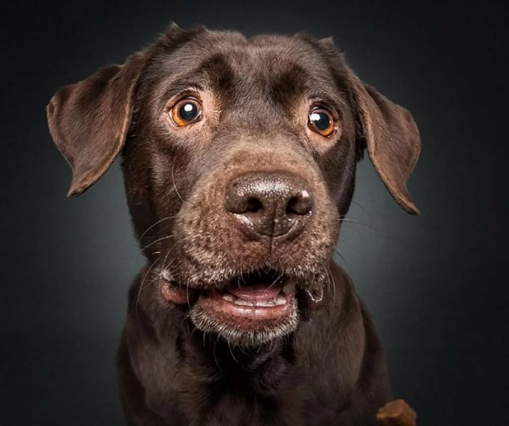 Картинки собак морды