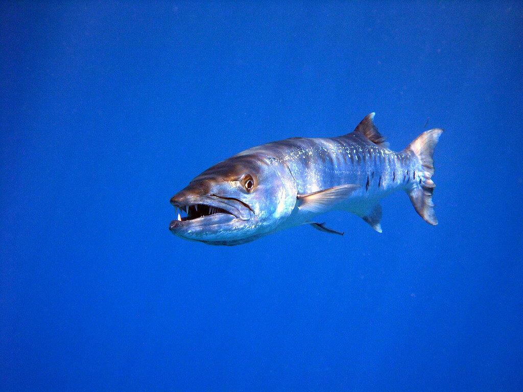 картинки про хищных рыб всего свете люблю