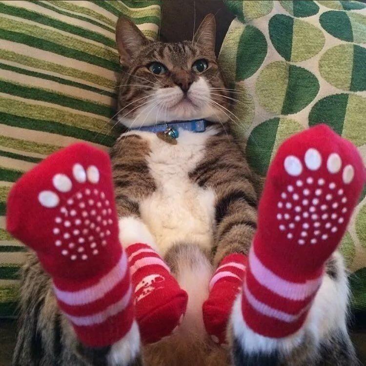 Ежедневный котик :: @дневники: асоциальная сеть