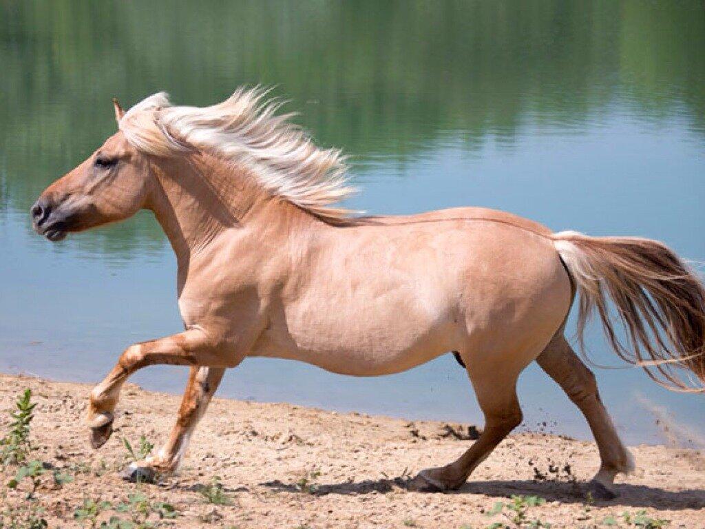 снимки белокурых картинки лошади земляной критики
