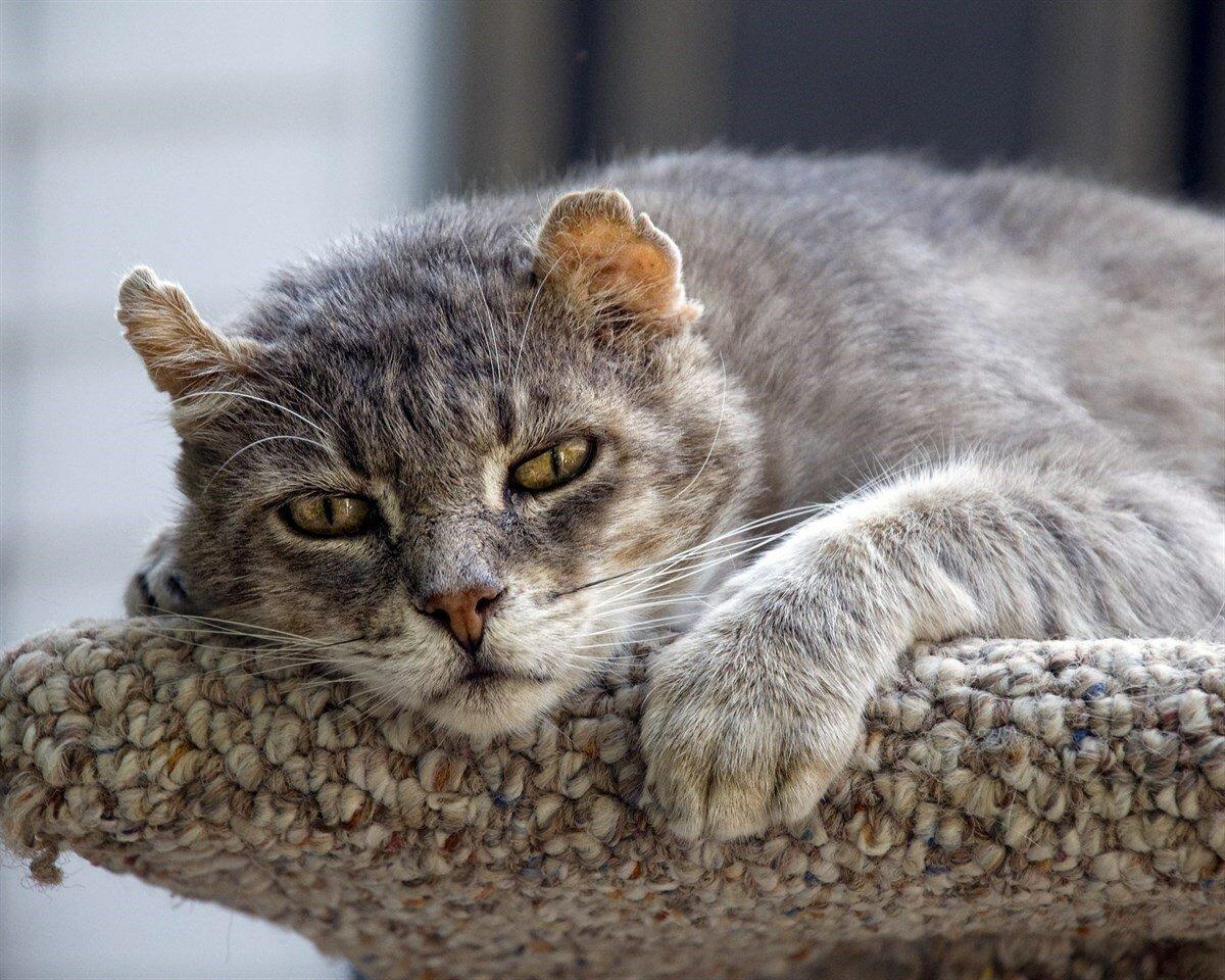 Года ценятся, картинки для рабочего стола прикольные кошки
