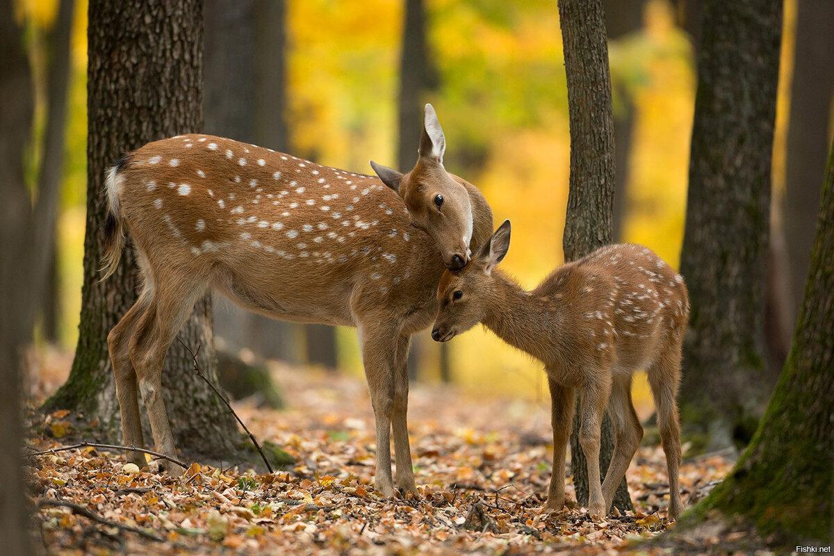 менее, фотографии всех лесных животных могут