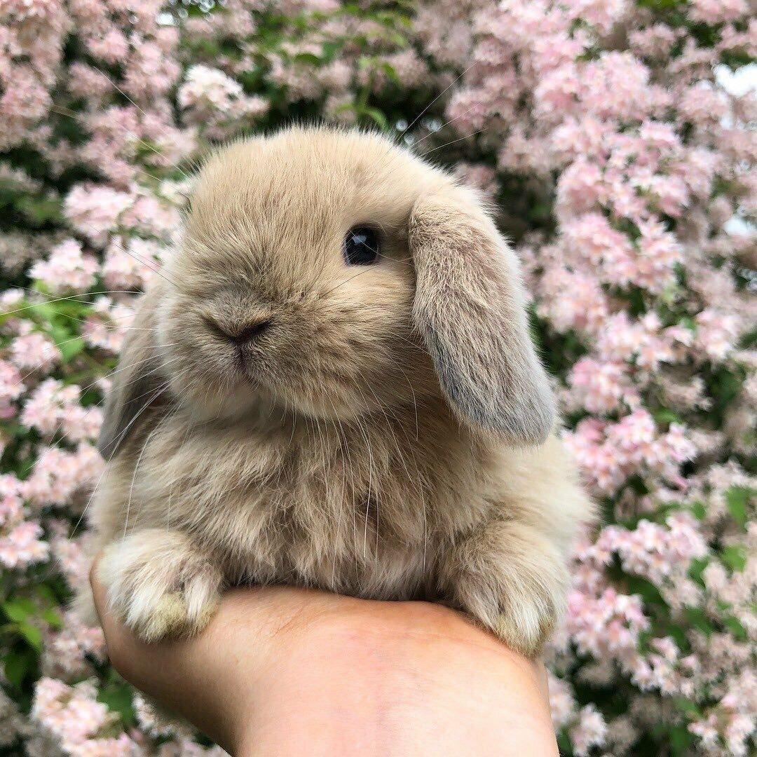 Кролик живые картинки